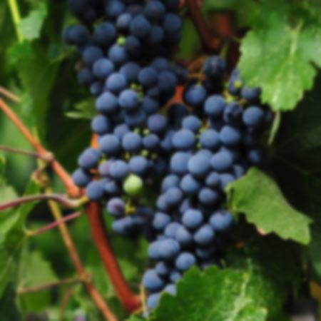 categoria-vino-doowine