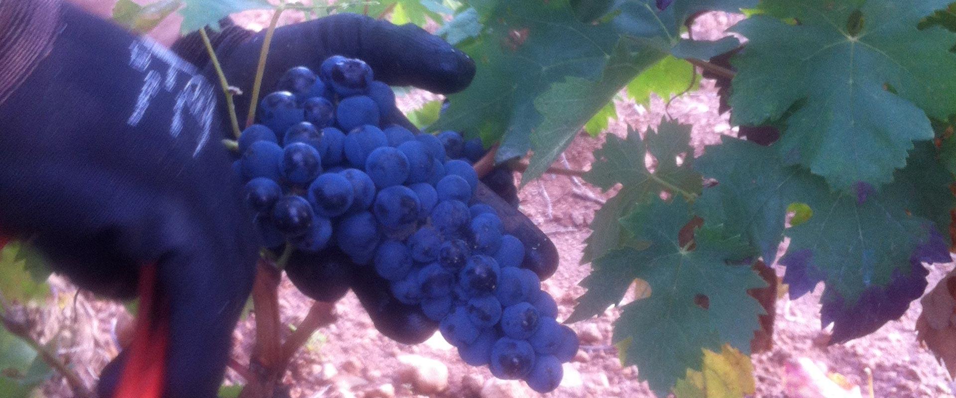 el-vino-prodigo-doowine-2