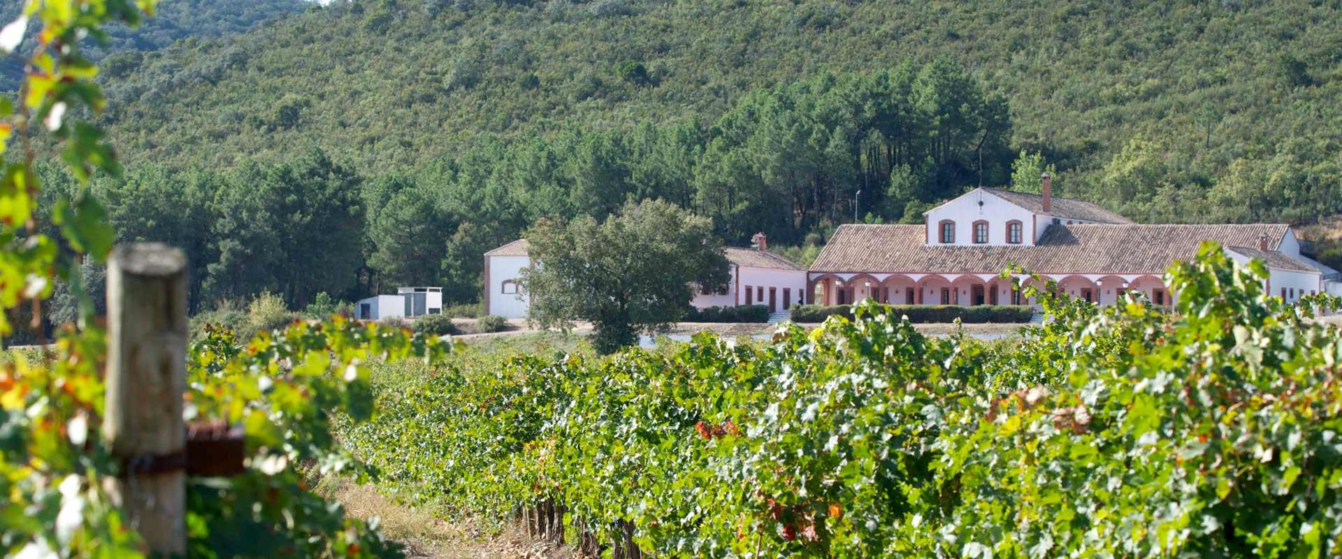 bodega-dehesa-del-carrizal-vino-doowine