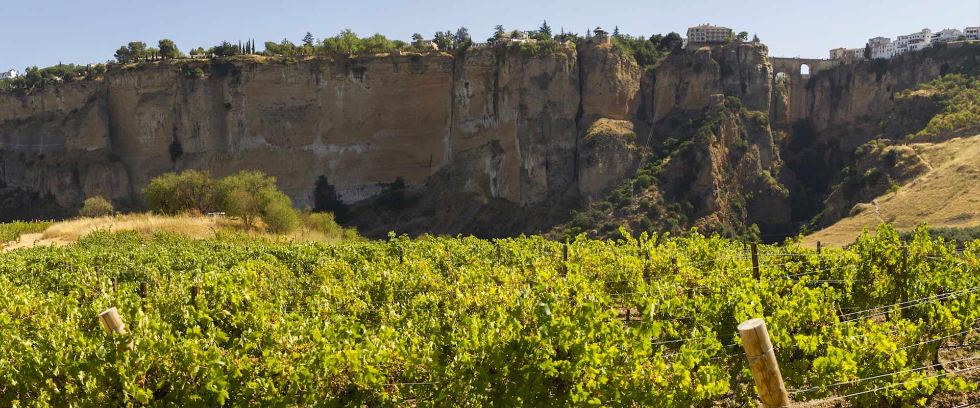 bodegas-samsara-wines-doowine