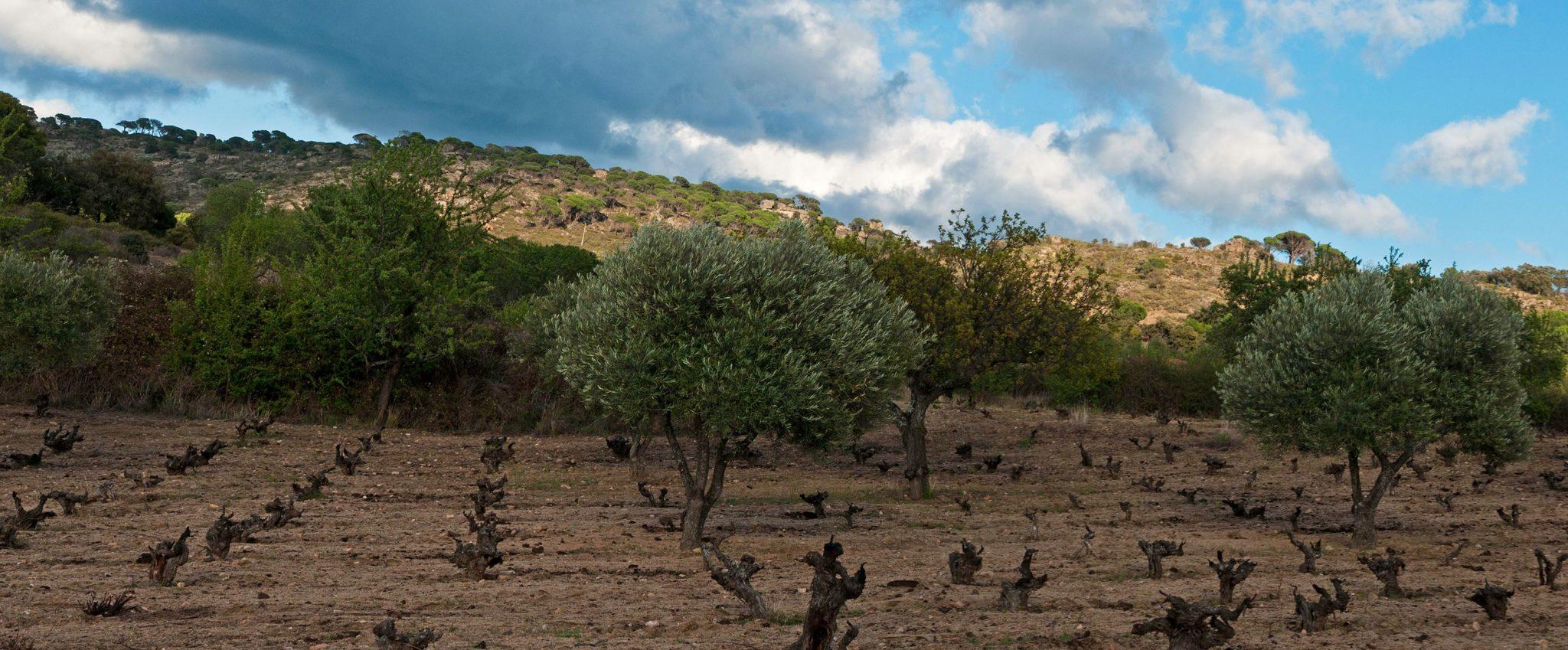 comprar-vino-4-monos-viticultores-doowine